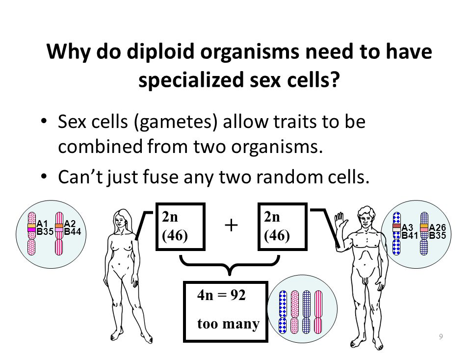 Why do diploid organisms need to have specialized sex cells.