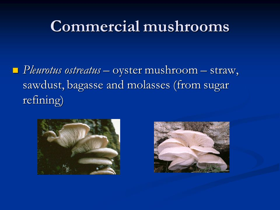Commercial mushrooms Pleurotus ostreatus – oyster mushroom – straw, sawdust, bagasse and molasses (from sugar refining) Pleurotus ostreatus – oyster mushroom – straw, sawdust, bagasse and molasses (from sugar refining)