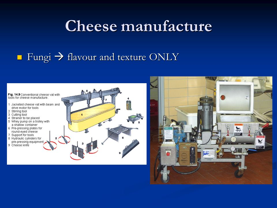 Cheese manufacture Fungi  flavour and texture ONLY Fungi  flavour and texture ONLY