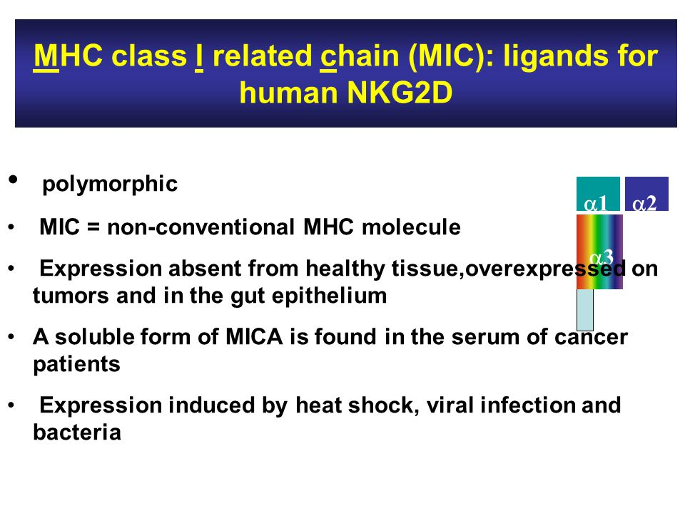 MHC class I related chain (MIC): ligands for human NKG2D 11 22 33 polymorphic MIC = non-conventional MHC molecule Expression absent from healthy tissue,overexpressed on tumors and in the gut epithelium A soluble form of MICA is found in the serum of cancer patients Expression induced by heat shock, viral infection and bacteria