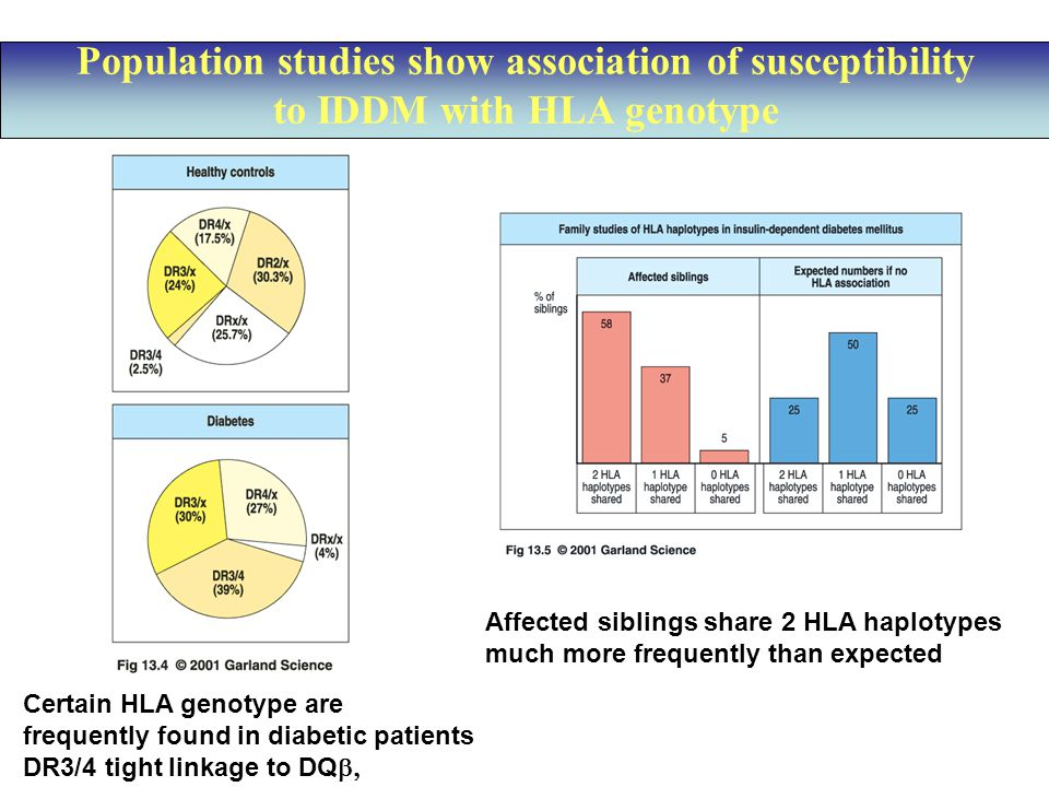 Population studies show association of susceptibility to IDDM with HLA genotype Certain HLA genotype are frequently found in diabetic patients DR3/4 tight linkage to DQ  Affected siblings share 2 HLA haplotypes much more frequently than expected