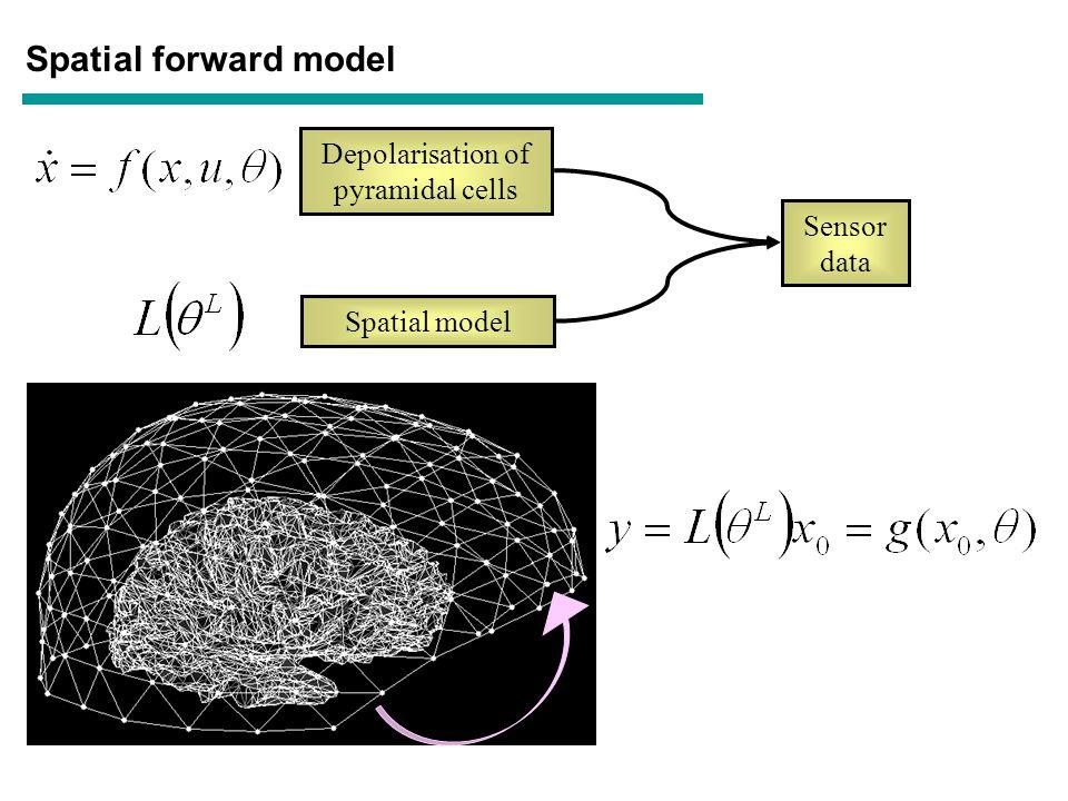 Spatial forward model Depolarisation of pyramidal cells Spatial model Sensor data