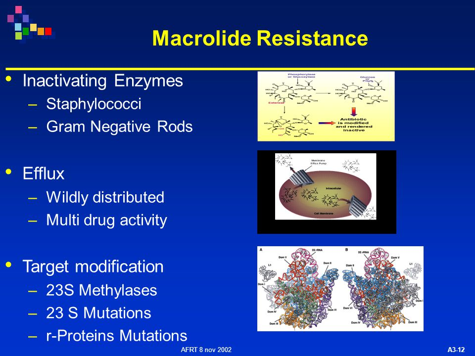 AFRT 8 nov 2002 A3-12 Macrolide Resistance Inactivating Enzymes –Staphylococci –Gram Negative Rods Efflux –Wildly distributed –Multi drug activity Target modification –23S Methylases –23 S Mutations –r-Proteins Mutations