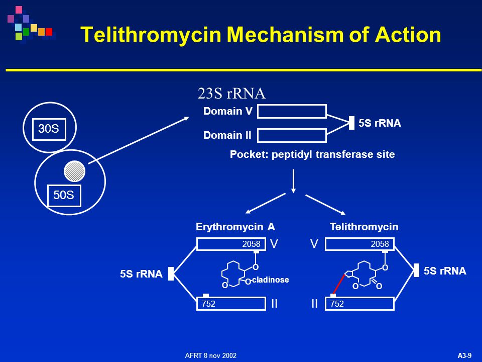 AFRT 8 nov 2002 A3-10 Consequence of Double Binding to 23S rRNA 2058 752 V II V Erythromycin ATelithromycin 2058 752 No link with domain V Resistance to erythromycin A Link with domain II Telithromycin retains activity against erythromycin A- resistant organisms 5S rRNA -cladinose O O O O O O (methylation) xx