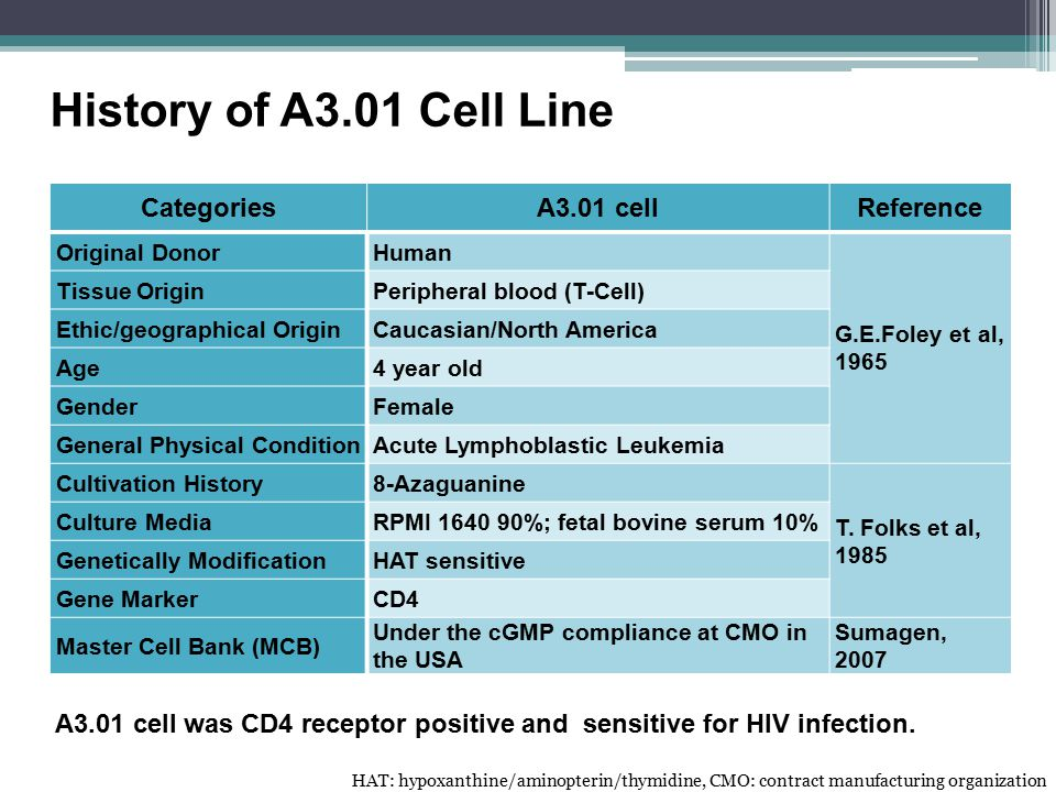 A3.01 cell was CD4 receptor positive and sensitive for HIV infection.