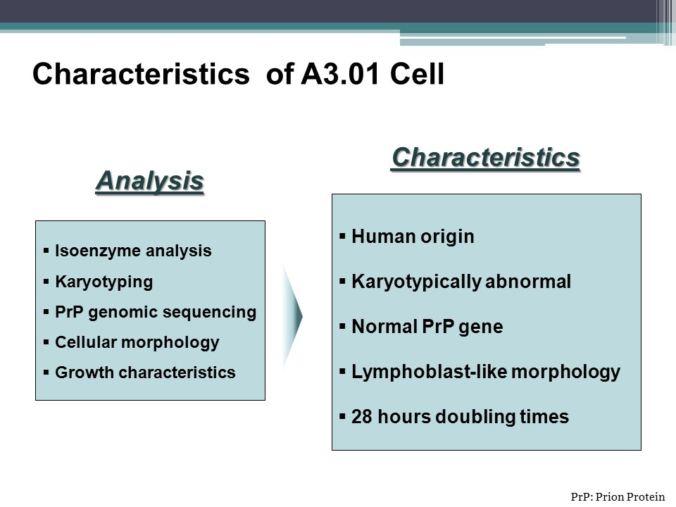  Isoenzyme analysis  Karyotyping  PrP genomic sequencing  Cellular morphology  Growth characteristics Characteristics of A3.01 Cell  Human origin  Karyotypically abnormal  Normal PrP gene  Lymphoblast-like morphology  28 hours doubling times Analysis Characteristics PrP: Prion Protein
