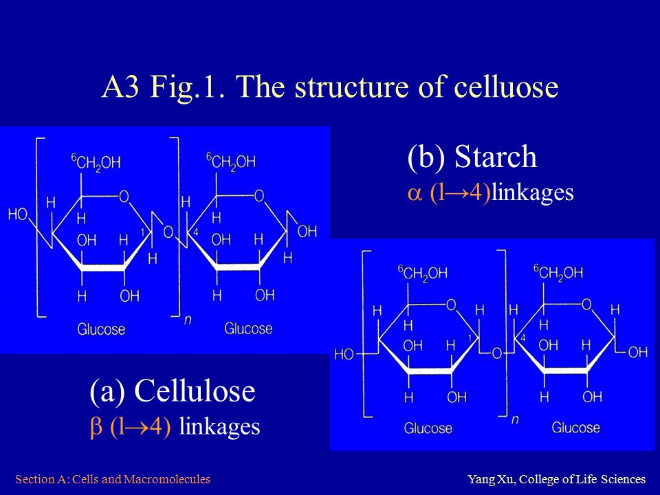 Section A: Cells and MacromoleculesYang Xu, College of Life Sciences A3 Fig.1.