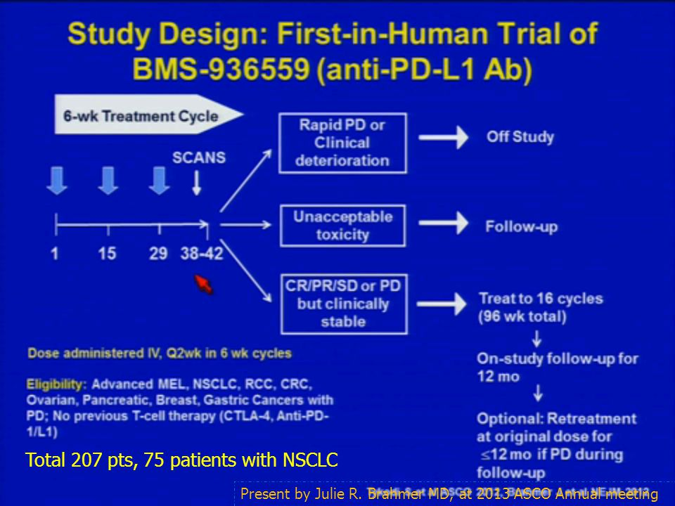 Anti-PD-L1: BMS-936559 Total 207 pts, 75 patients with NSCLC Present by Julie R. Brahmer MD, at 2013 ASCO Annual meeting