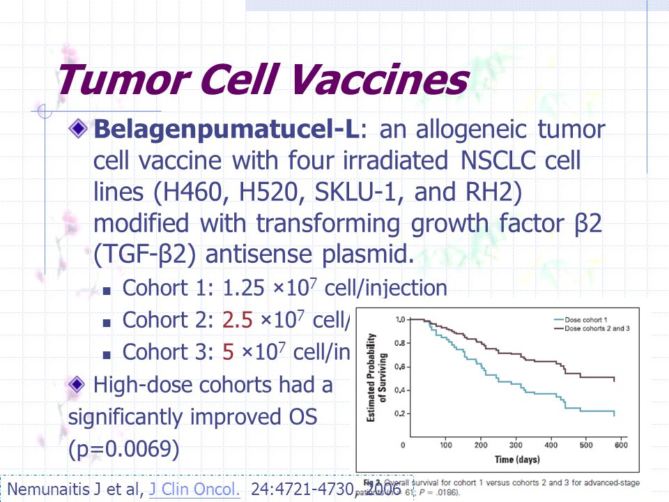 Tumor Cell Vaccines Belagenpumatucel-L: an allogeneic tumor cell vaccine with four irradiated NSCLC cell lines (H460, H520, SKLU-1, and RH2) modified with transforming growth factor β2 (TGF-β2) antisense plasmid.