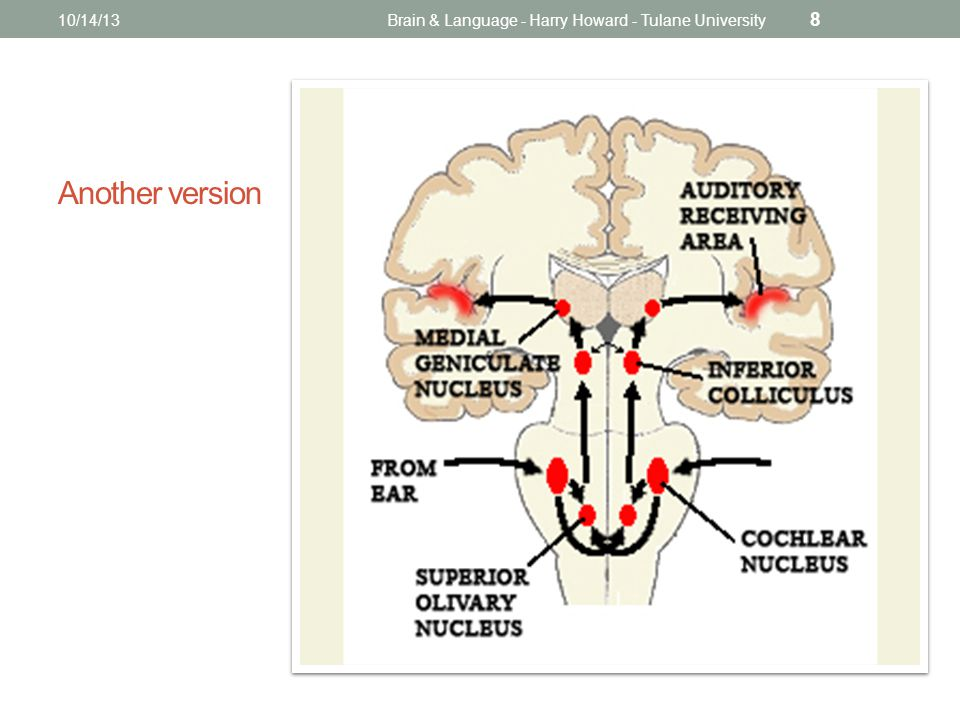 Another version 10/14/13Brain & Language - Harry Howard - Tulane University 8