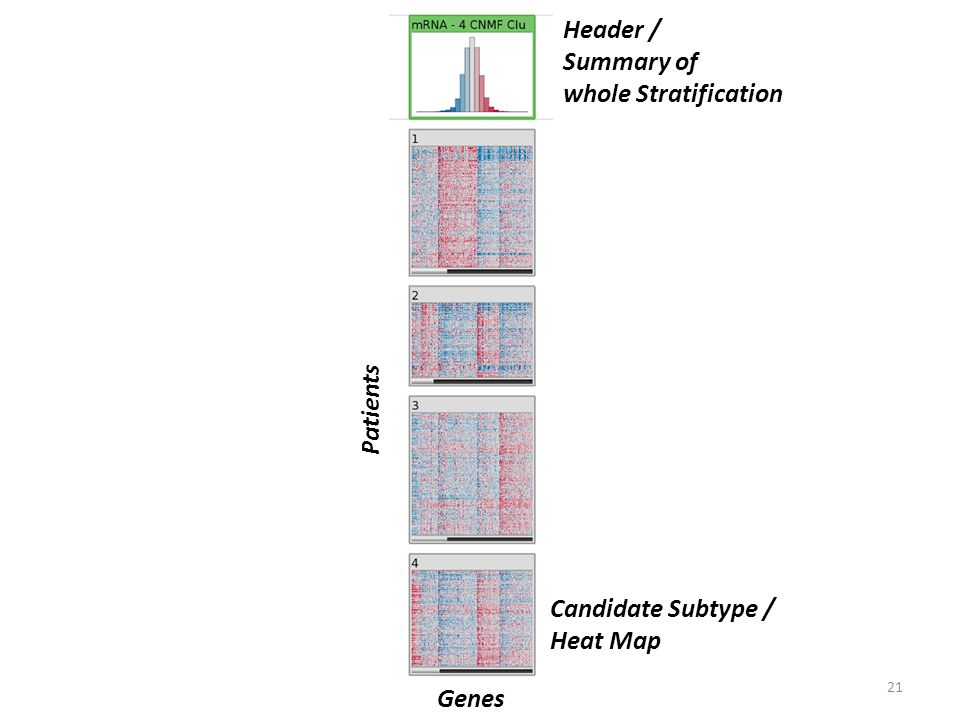 21 Patients Genes Candidate Subtype / Heat Map Header / Summary of whole Stratification