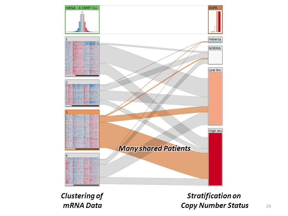 24 Clustering of mRNA Data Stratification on Copy Number Status