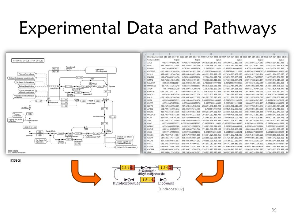 Experimental Data and Pathways [Lindroos2002] [KEGG] 39