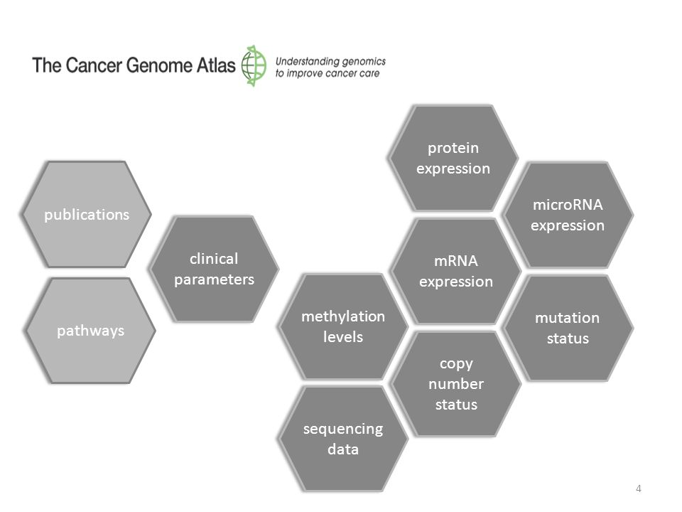 4 methylation levels mRNA expression copy number status mutation status microRNA expression clinical parameters pathways protein expression sequencing data publications