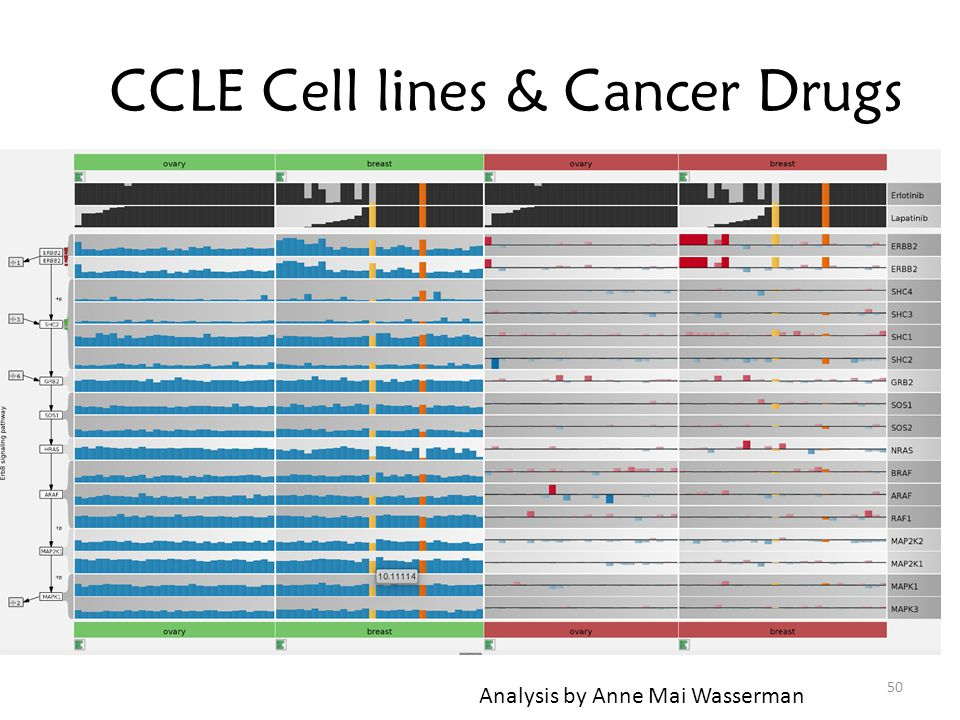 CCLE Cell lines & Cancer Drugs 50 Analysis by Anne Mai Wasserman