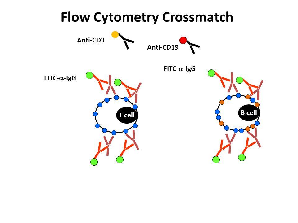 T cell B cell Anti-CD3 Anti-CD19 Flow Cytometry Crossmatch FITC-  -IgG