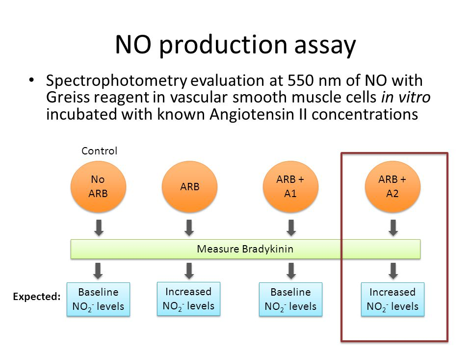 NO production assay Spectrophotometry evaluation at 550 nm of NO with Greiss reagent in vascular smooth muscle cells in vitro incubated with known Ang