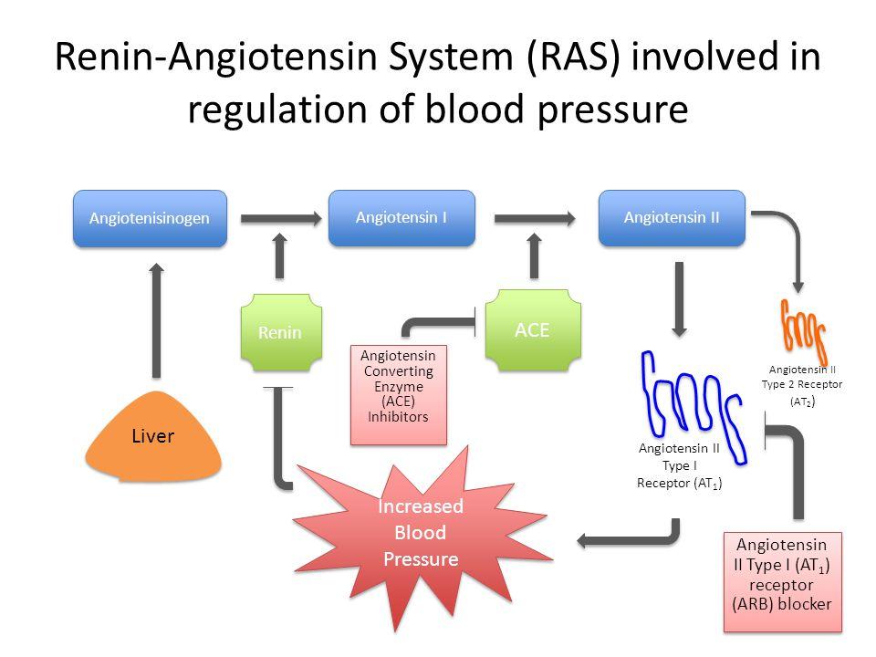 Renin-Angiotensin System (RAS) involved in regulation of blood pressure Angiotensin I Angiotensin II Liver Renin ACE Angiotensin II Type I Receptor (A
