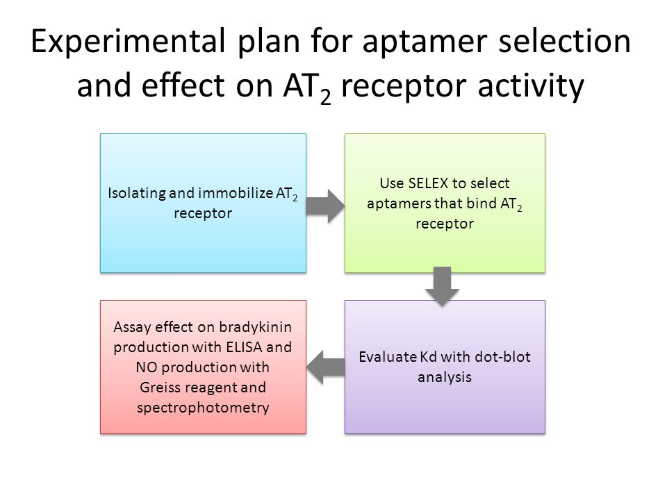 Experimental plan for aptamer selection and effect on AT 2 receptor activity Isolating and immobilize AT 2 receptor Isolating and immobilize AT 2 rece