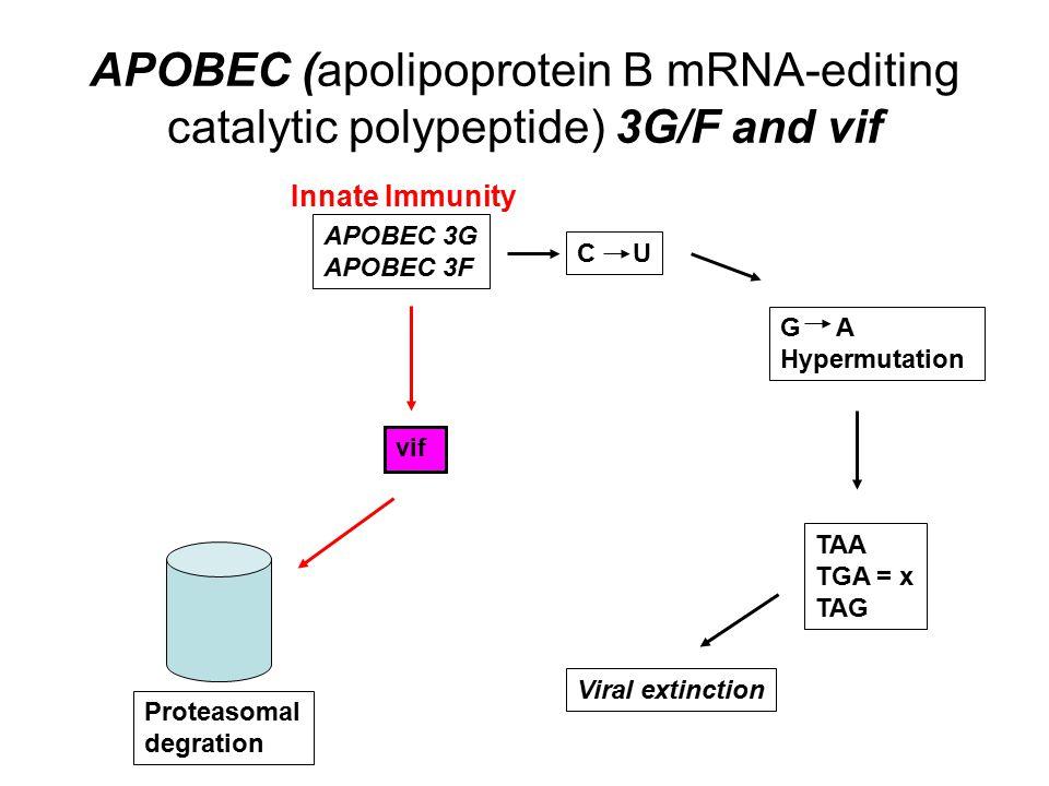 APOBEC (apolipoprotein B mRNA-editing catalytic polypeptide) 3G/F and vif APOBEC 3G APOBEC 3F C U G A Hypermutation TAA TGA = x TAG Viral extinction vif Proteasomal degration Innate Immunity