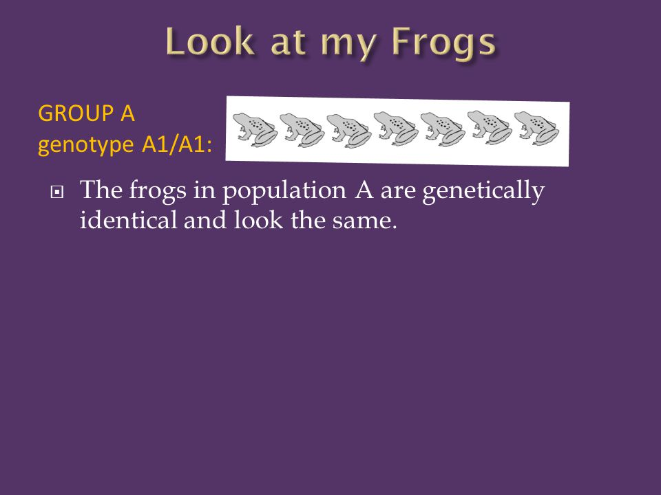  The frogs in population A are genetically identical and look the same. GROUP A genotype A1/A1: