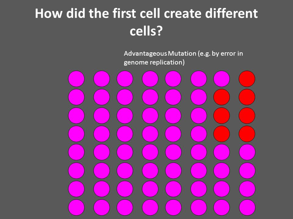 How did the first cell create different cells. Advantageous Mutation (e.g.