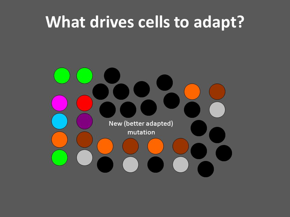 New (better adapted) mutation What drives cells to adapt