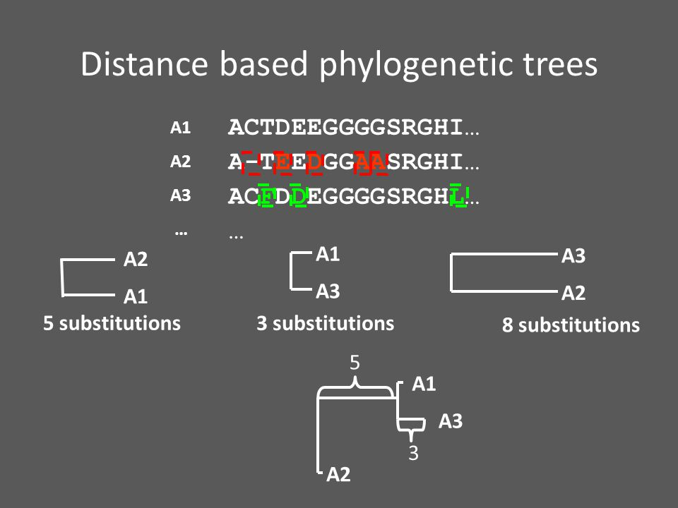Distance based phylogenetic trees ACTDEEGGGGSRGHI… A-TEEDGGAASRGHI… ACFDDEGGGGSRGHL… … A1 A2 A3 … A1 A2 A3 A1 5 substitutions 3 substitutions A2 A3 8