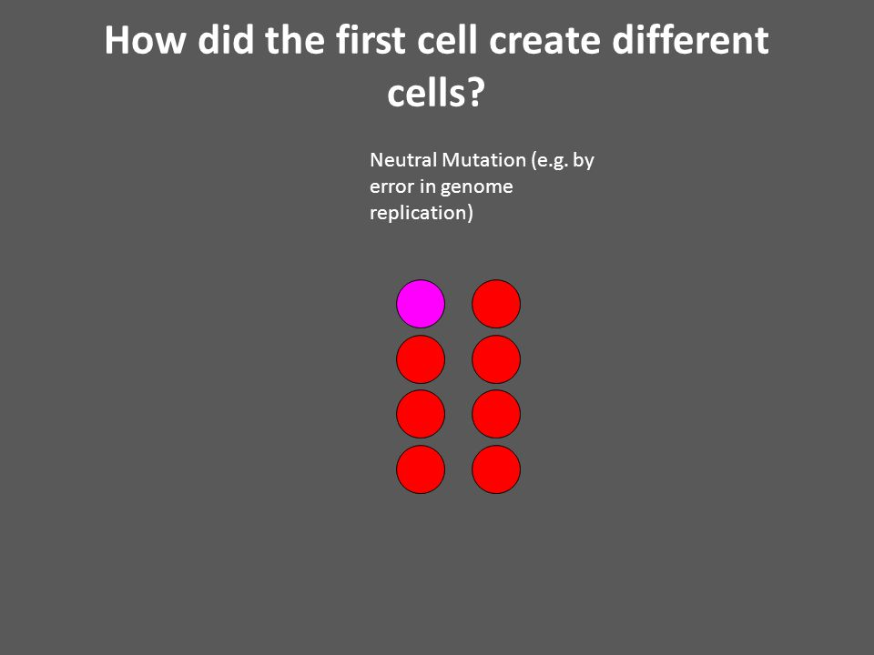 How did the first cell create different cells. Neutral Mutation (e.g.
