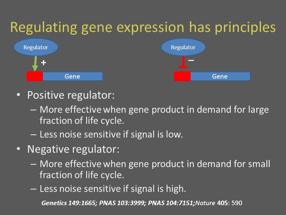 Regulating gene expression has principles Positive regulator: – More effective when gene product in demand for large fraction of life cycle.