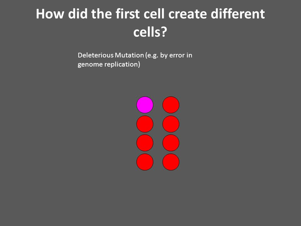 How did the first cell create different cells. Deleterious Mutation (e.g.