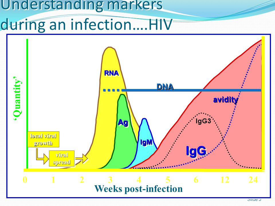 Understanding markers during an infection….HIV Slide 5 RNARNA AgAg IgMIgM IgGIgG 'Quantity' viral spread local viral growth 0 0 1 1 2 2 3 3 4 4 5 5 6 6 12 24 Weeks post-infection avidity IgG3 DNADNA