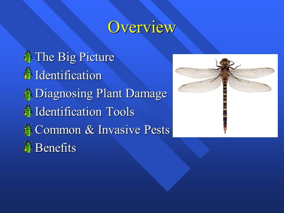 Overview n The Big Picture n Identification n Diagnosing Plant Damage n Identification Tools n Common & Invasive Pests n Benefits