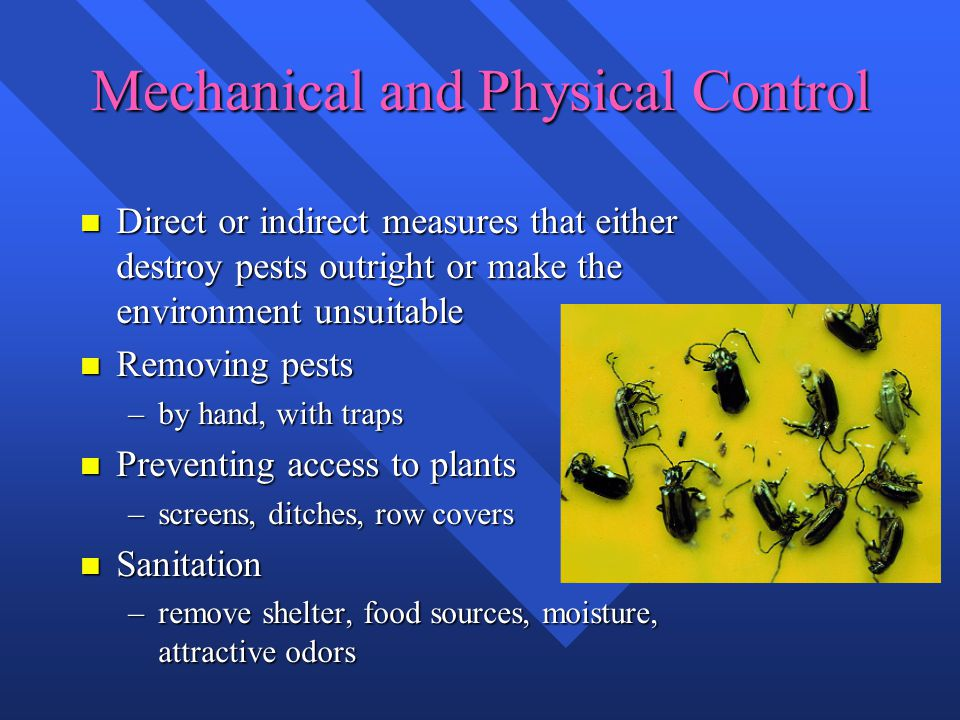 Mechanical and Physical Control n Direct or indirect measures that either destroy pests outright or make the environment unsuitable n Removing pests –by hand, with traps n Preventing access to plants –screens, ditches, row covers n Sanitation –remove shelter, food sources, moisture, attractive odors