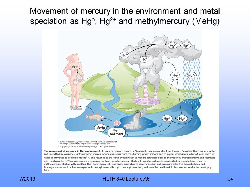 HLTH 340 Lecture A5W2013 14 Movement of mercury in the environment and metal speciation as Hg o, Hg 2+ and methylmercury (MeHg)