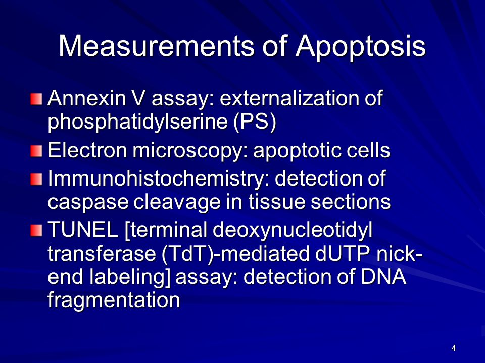 4 Measurements of Apoptosis Annexin V assay: externalization of phosphatidylserine (PS) Electron microscopy: apoptotic cells Immunohistochemistry: detection of caspase cleavage in tissue sections TUNEL [terminal deoxynucleotidyl transferase (TdT)-mediated dUTP nick- end labeling] assay: detection of DNA fragmentation