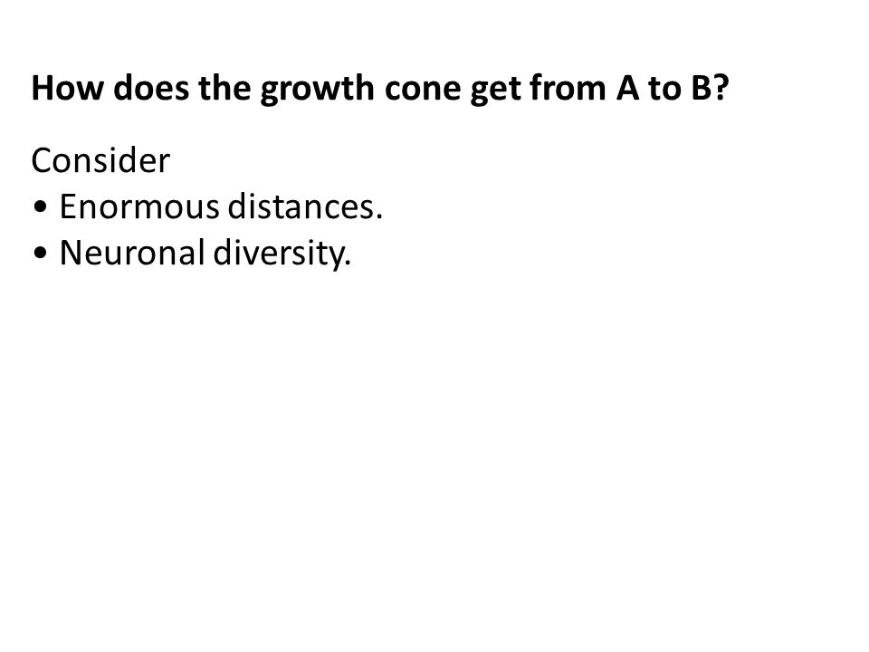 How does the growth cone get from A to B? Consider Enormous distances. Neuronal diversity.