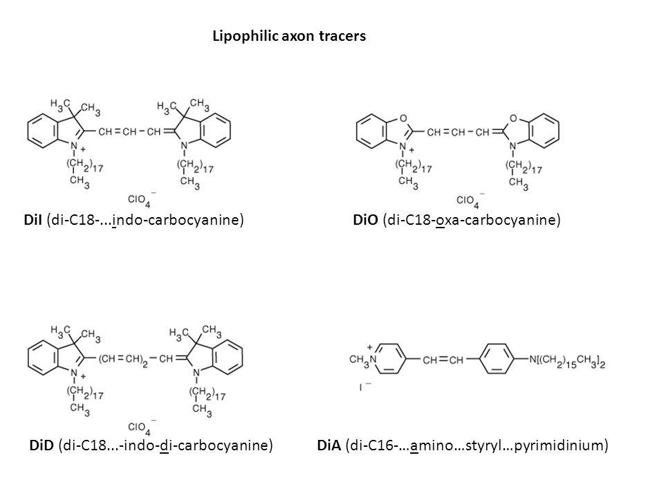 Lipophilic axon tracers DiI (di-C18-...indo-carbocyanine)DiO (di-C18-oxa-carbocyanine) DiD (di-C18...-indo-di-carbocyanine)DiA (di-C16-…amino…styryl…p