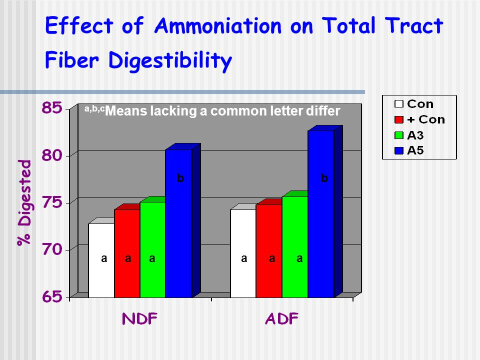 Effect of Ammoniation on Total Tract Fiber Digestibility % Digested a,b,c Means lacking a common letter differ aaaa b a a b