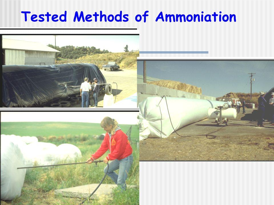 Tested Methods of Ammoniation