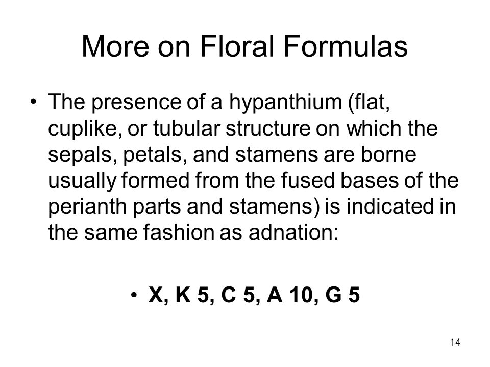 14 More on Floral Formulas The presence of a hypanthium (flat, cuplike, or tubular structure on which the sepals, petals, and stamens are borne usually formed from the fused bases of the perianth parts and stamens) is indicated in the same fashion as adnation: X, K 5, C 5, A 10, G 5