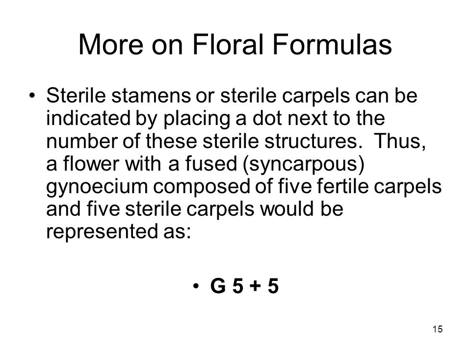 15 More on Floral Formulas Sterile stamens or sterile carpels can be indicated by placing a dot next to the number of these sterile structures.