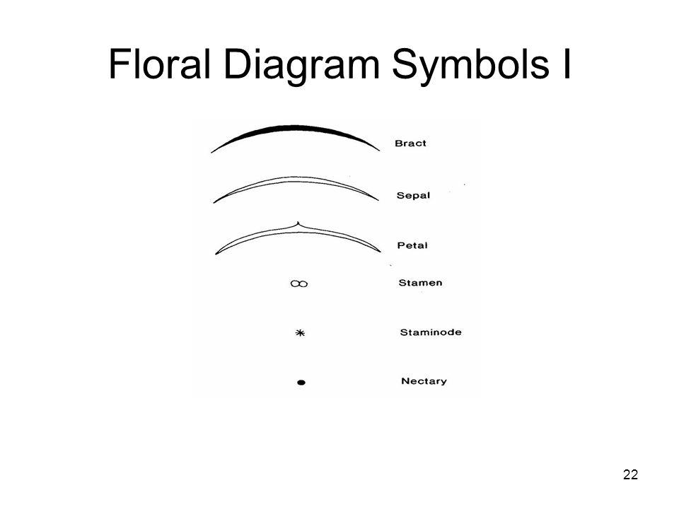 22 Floral Diagram Symbols I