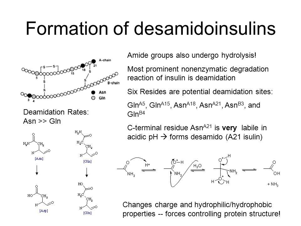 Formation of desamidoinsulins Amide groups also undergo hydrolysis.