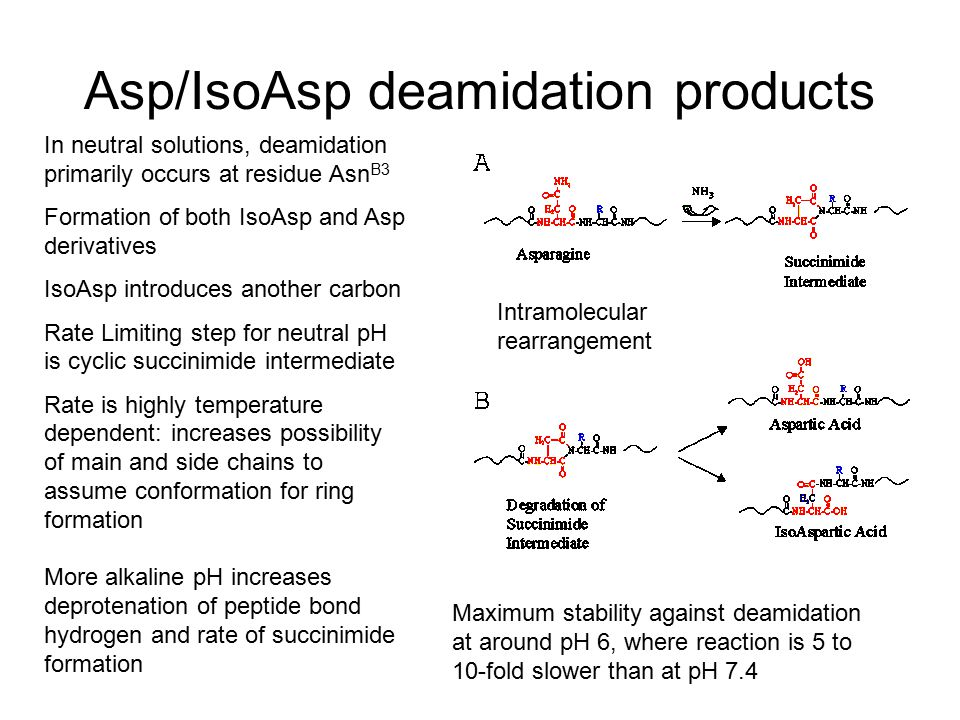 Asp/IsoAsp deamidation products In neutral solutions, deamidation primarily occurs at residue Asn B3 Formation of both IsoAsp and Asp derivatives IsoAsp introduces another carbon Rate Limiting step for neutral pH is cyclic succinimide intermediate Rate is highly temperature dependent: increases possibility of main and side chains to assume conformation for ring formation More alkaline pH increases deprotenation of peptide bond hydrogen and rate of succinimide formation Maximum stability against deamidation at around pH 6, where reaction is 5 to 10-fold slower than at pH 7.4 Intramolecular rearrangement