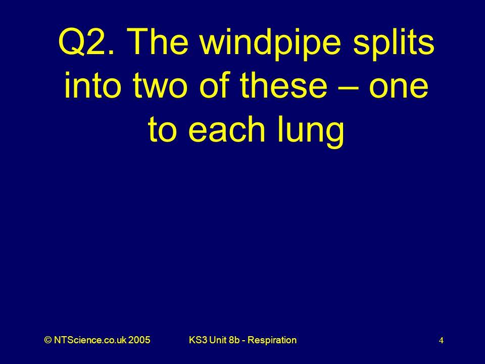 © NTScience.co.uk 2005KS3 Unit 8b - Respiration5 A2. Bronchus