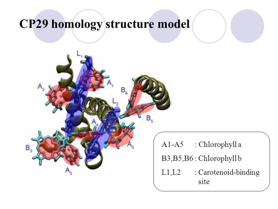 CP29 homology structure model A1-A5 : Chlorophyll a B3,B5,B6 : Chlorophyll b L1,L2 : Carotenoid-binding site