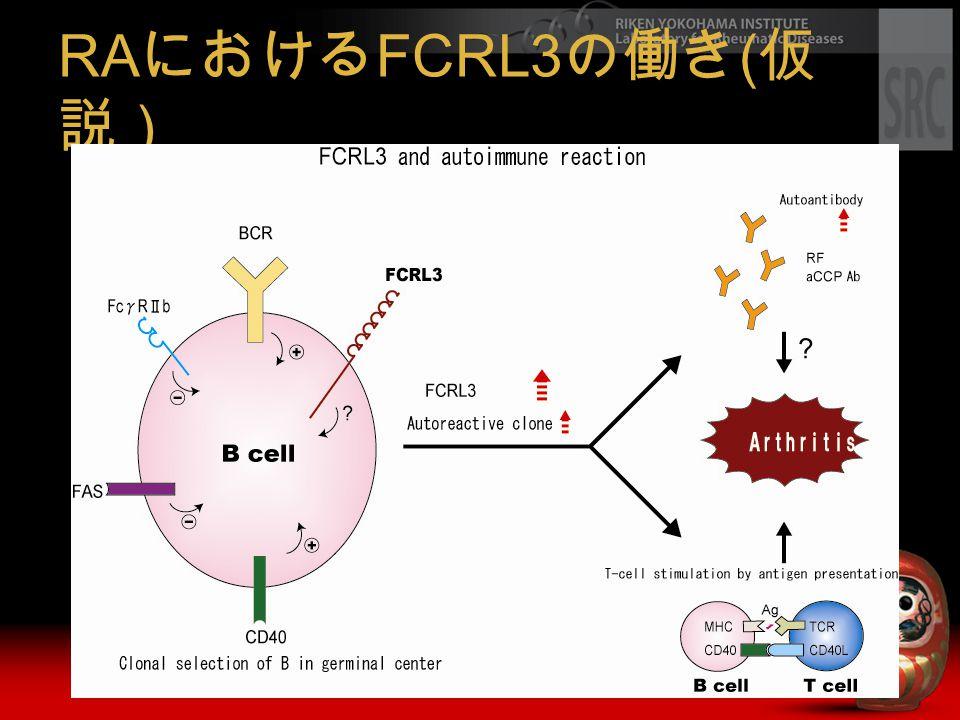 RA における FCRL3 の働き ( 仮 説)