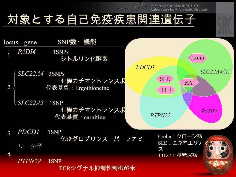 PADI4 4SNPs シトルリン化酵素 SLC22A4 3SNPs 有機カチオントランスポーター 代表基質: Ergothioneine SLC22A5 1SNP 有機カチオントランスポーター 代表基質: carnitine PDCD1 1SNP 免疫グロブリンスーパーファミ リー 分子 PTPN
