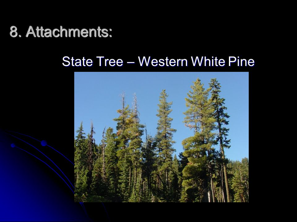 8. Attachments: State Tree – Western White Pine State Tree – Western White Pine